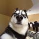 DL6ER's avatar